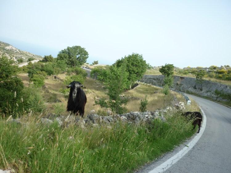 italiainpiega-pieghe meravigliose-itinerari-moto-sud-italia-gargano-foresta umbra 6