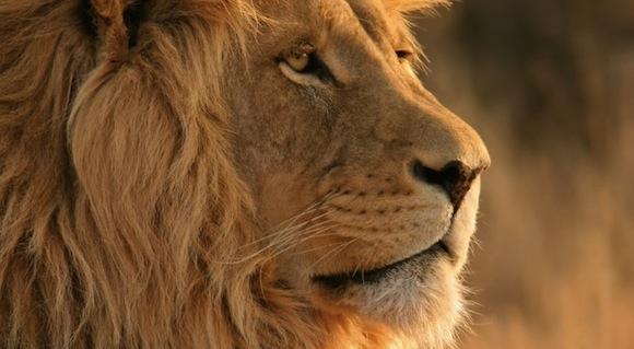 Lion 728x400 Mac OS X Lion: al WWDC il primo ruggito?