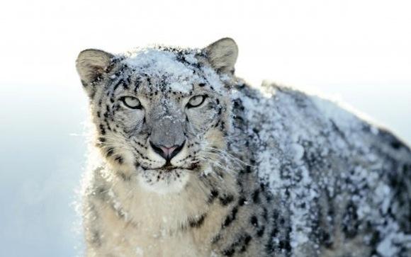 snow leopard 500 Mac OS X 10.6.8: rilascio a breve?