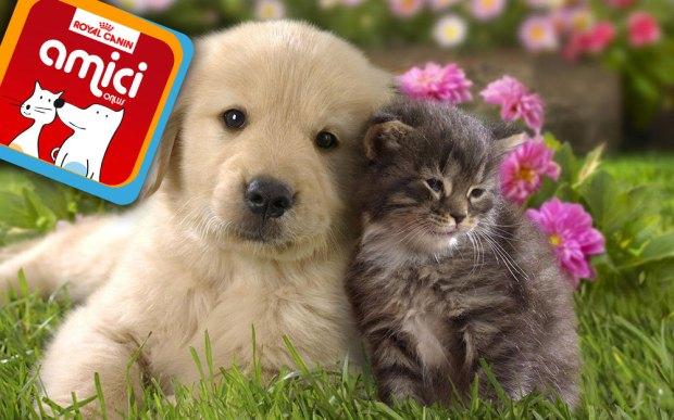 cane gatto 620x387 Arriva la app Amici, per i nostri amici animali e per le strutture pet friendly