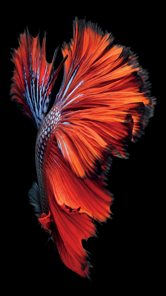 iPhone-6s-Fish-Red-Wallpaper-576x1024