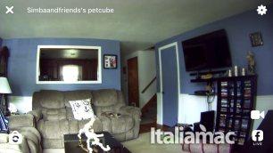 %name Petcube Camera, la webcam per tenere sottocchio i nostri amici a quattro zampe