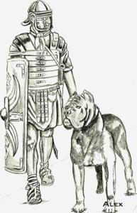 storia cane corso