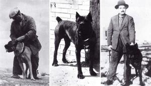 storia del cane corso