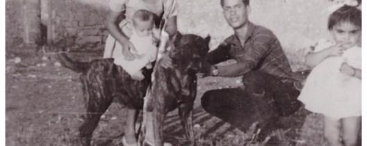 Fam. Denaro, 1958, Sicilia. Ebro, campione di lotta e vincitore di più di 30 incontri. Cani chiamati CUR SICEDDI, di scorta ai carrettieri