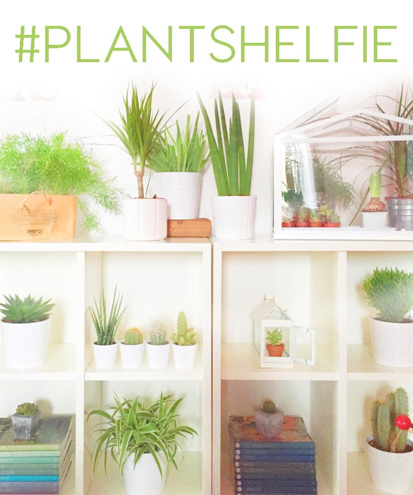 Shelf green decor ideas -urbanjunglebloggers