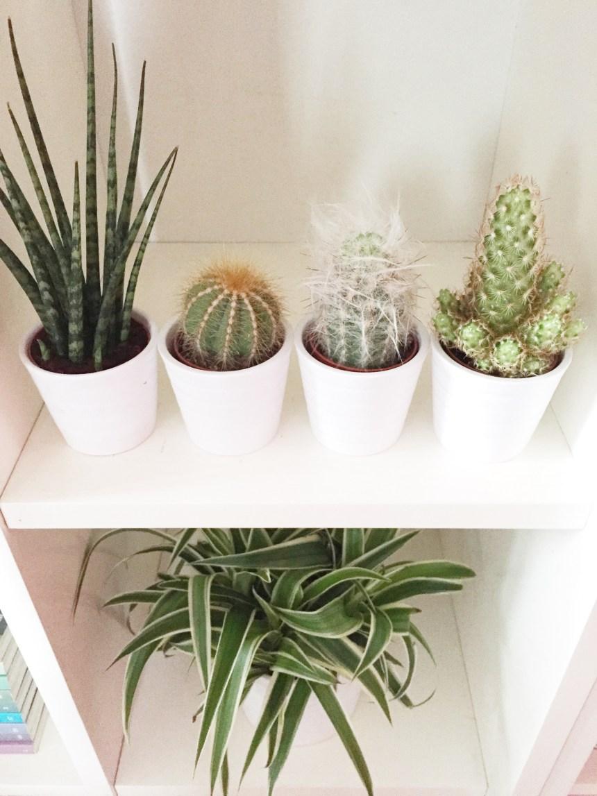 #plantshelfie #urbanjunglebloggers - ikea kardemumma pots