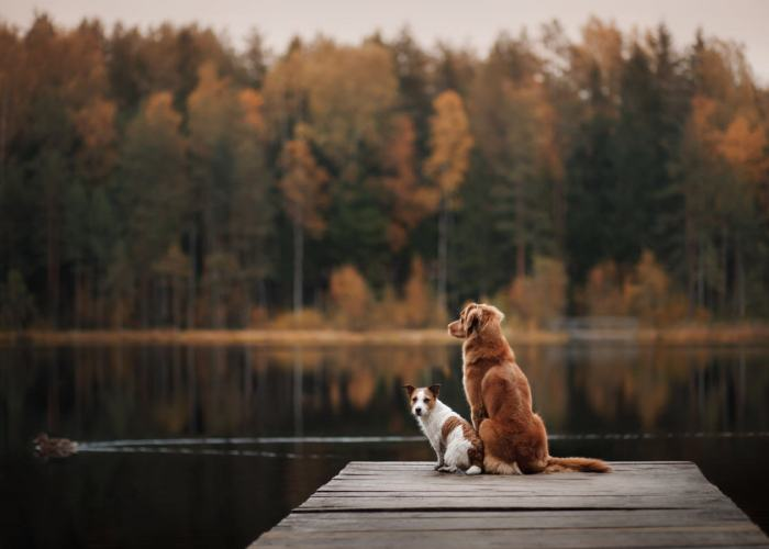 Top creative brands bringing dog-friendly travel to the next level