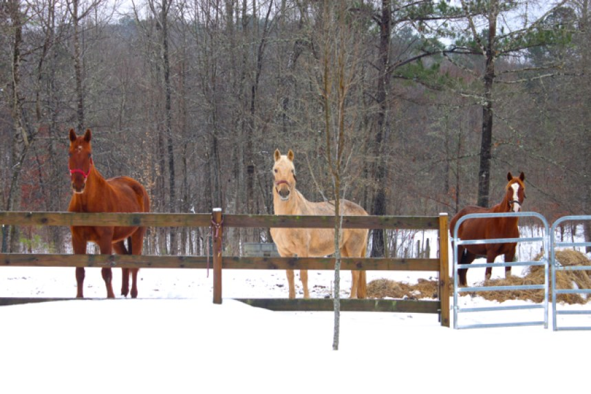 """the horses are saying, """"What Is This White Stuff?"""""""