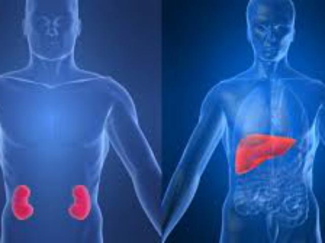 Risultati immagini per troppe proteine fanno male