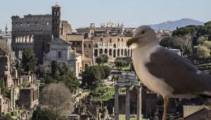 11/03/2017 Roma. Foro Romano. Nella foto il Foro Romano visto dal Campidoglio