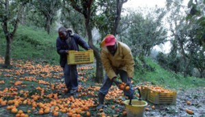 Lavoratori a Nero - 1024x576@LaStampa.it - www-lastampa-it - 350X200