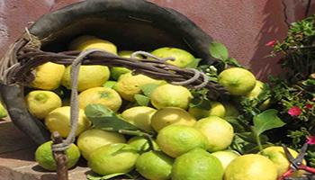 Ai limoni dell'Etna la certificazione IGP dell'Unione europea