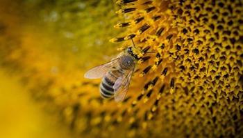 Piano apistico nazionale: aperto il bando per l'accesso ai finanziamenti per l'annualità 2022