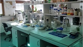 """Scoperto il """"super anticorpo monoclonale"""" contro Covid e nuovi virus"""