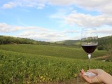 world travel market toscana vino campagna arezzo visit buy tuscany