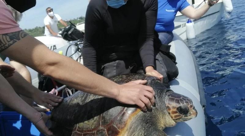 Hanno ritrovato la libertà nel mare di Procida le tartarughe marine Spring e Liliana reduci da ricovero e riabilitazione al Turtle Point della Stazione Zoologica Dohrn, a Napoli.