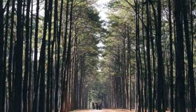 Percorso Shinrin-Yoku: Il Bagno Di Foresta
