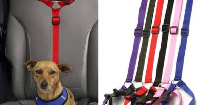 Car safety leash for animals 😸🐕 Cats and Dogs