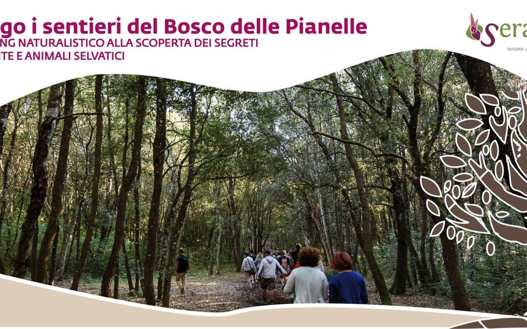 Lungo i sentieri del Bosco delle Pianelle