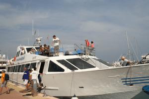Excursie Dolfijnen en Walvissen