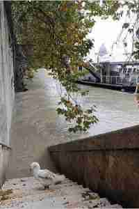 The Tiber breaks its banks.