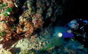 amb.marino con aragosta
