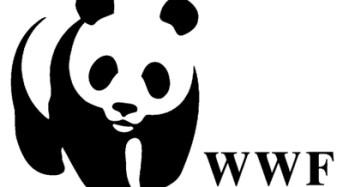 Ponte Stretto, WWF: sconsiderato rilanciare il progetto