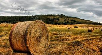 Ismea: Meno 5,5% i prezzi agricoli nel 2014