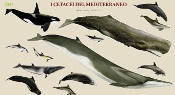 Dall'UNEP stop alle catture dei cetacei e al loro uso nei delfinari