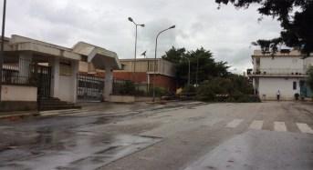 """Iniziati i lavori per rimuovere situazioni di pericolo al Liceo Scientifico O. M. Corbino di Siracusa e all'I.T.C """" E. Mattei"""" di Avola"""