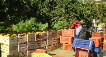 L'agricoltura del futuro nel dopo expo
