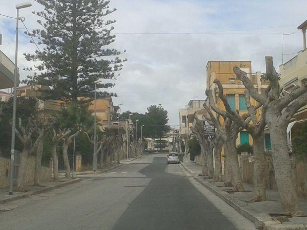 Marina di Ragusa alberi capitozzati 2