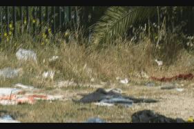 """Acate. I residenti del quartiere """"Belvedere"""" chiedono un'opera di bonifica contro pulci e zecche."""