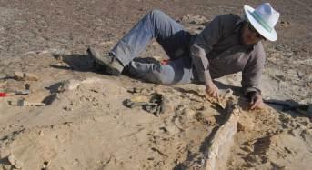Un deserto che prende vita: dal Perù nuove conoscenze sugli antichi ecosistemi oceanici