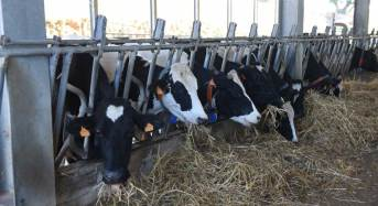 Contro l'abigeato nasce la banca dati del DNA dei capi di bestiame
