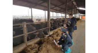 Caserta. Sequestrate 3 aziende coinvolte in una frode agroalimentare: Arrestati i responsabili