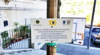 Modica. Lions Club Modica dona cinque alberi per la scalinata del duomo di San Giorgio