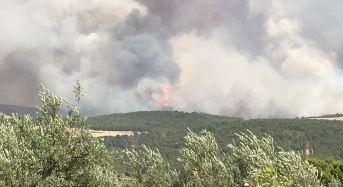 Incendi boschivi. Alcune considerazioni del dottore forestale Giorgio Vacchiano (SISEF)