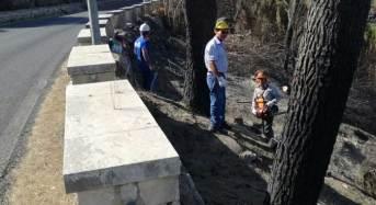 Avviata la bonifica della pineta di Chiaramonte Gulfi distrutta dagli incendi