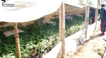 Comiso. Scoperta serra con oltre 700 piante di marijuana: carabinieri arrestano due persone