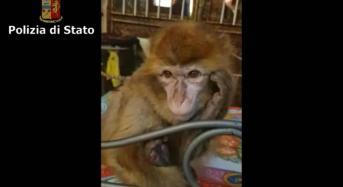 Catania. Ritrovata scimmia rubata