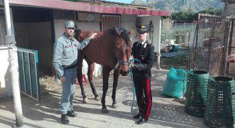 Carabinieri identificano fantino schiantatosi contro un palo