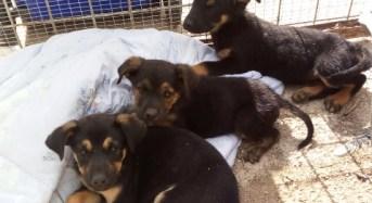 Noto. La polizia di stato denuncia tre persone, segnala due giovani e salva dei cuccioli