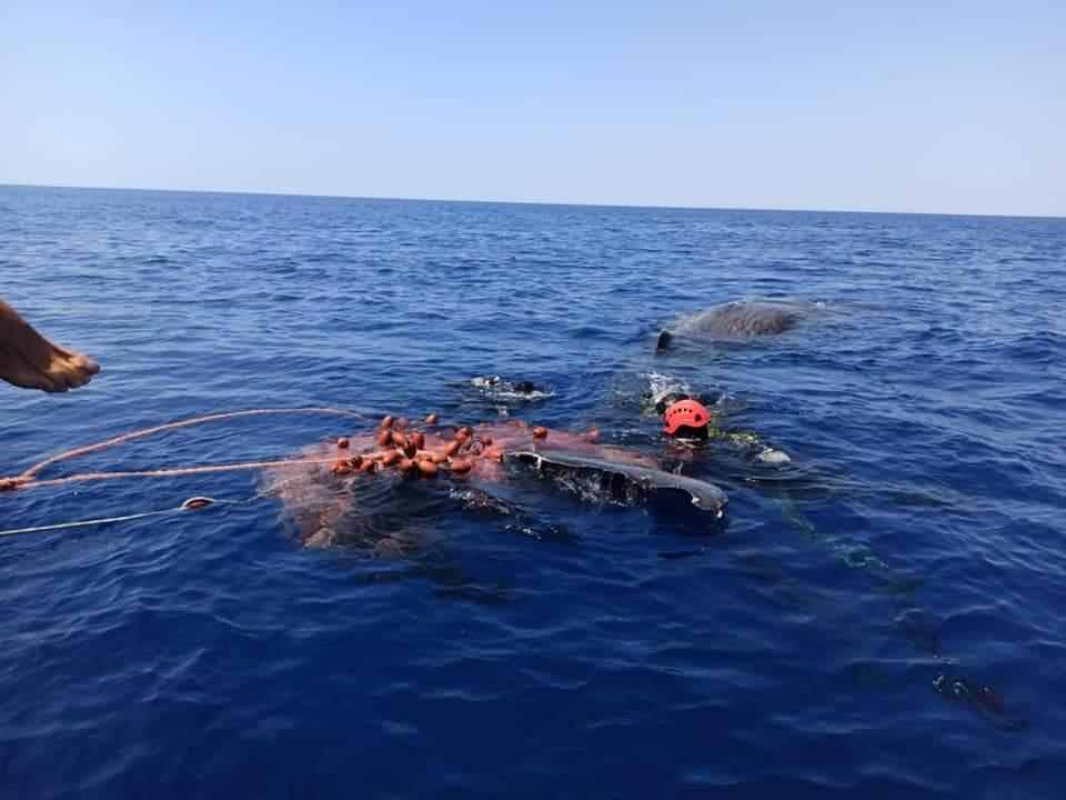 Capodoglio vittima di una rete da pesca illegale a Lipari