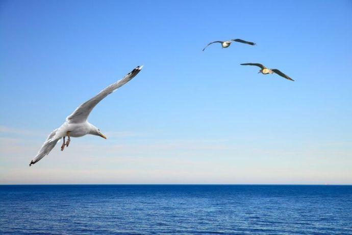 Maailma pelastetaan meri kerrallaan
