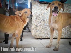 Cães abrigados na Uipa estão doentes, afirma comissão