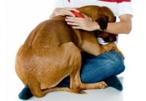 Cães e gatos, principalmente, sofrem muito por causa dos fogos (Ilustração)