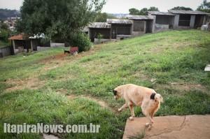 Entidade quer ampliar área coberta e reformar canis (Leo Santos)