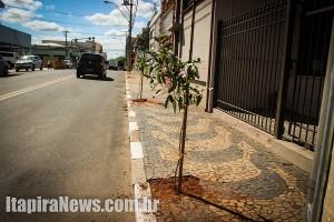 Novas árvores foram plantadas ao longo da via (Leo Santos)